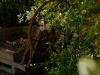 Jardin fleuri - Le Coing des vignes